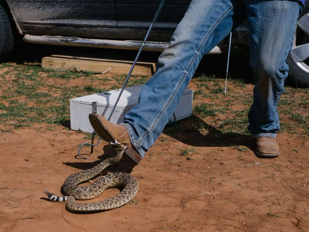 snake biting on the boot