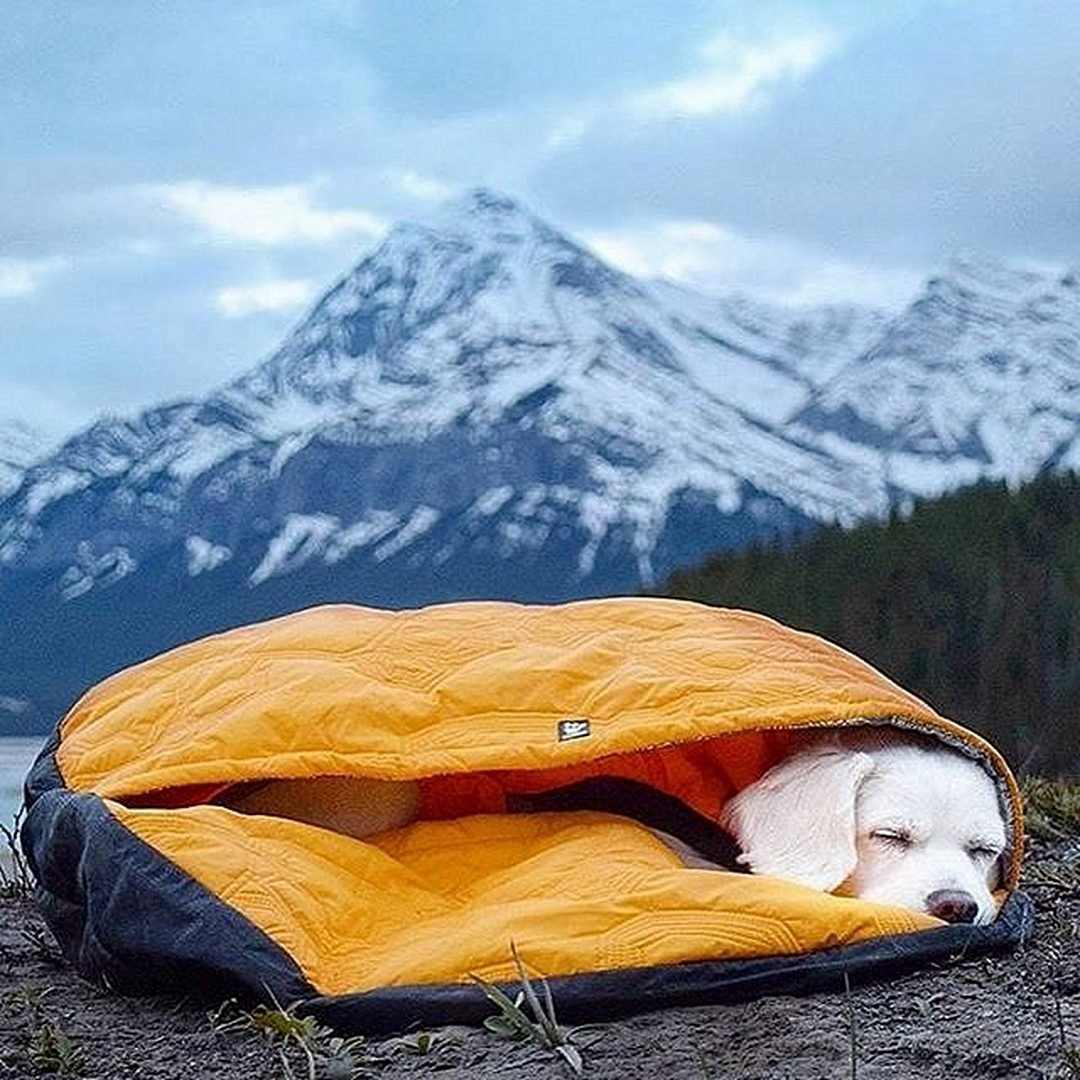 Sleeping puppy in a yellow sleeping bag
