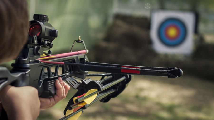 Reviews of Best Crossbow Bolts – Top Picks of 2021 + Buyer's Guide