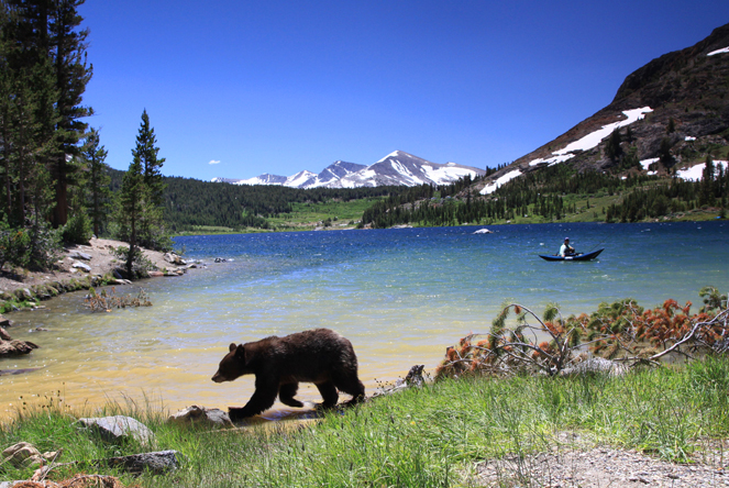 How To Protect Yourself From Bears While Hiking How To Protect Yourself From Bears While Hiking