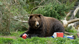 How to Keep Food Safe From Bears While Camping