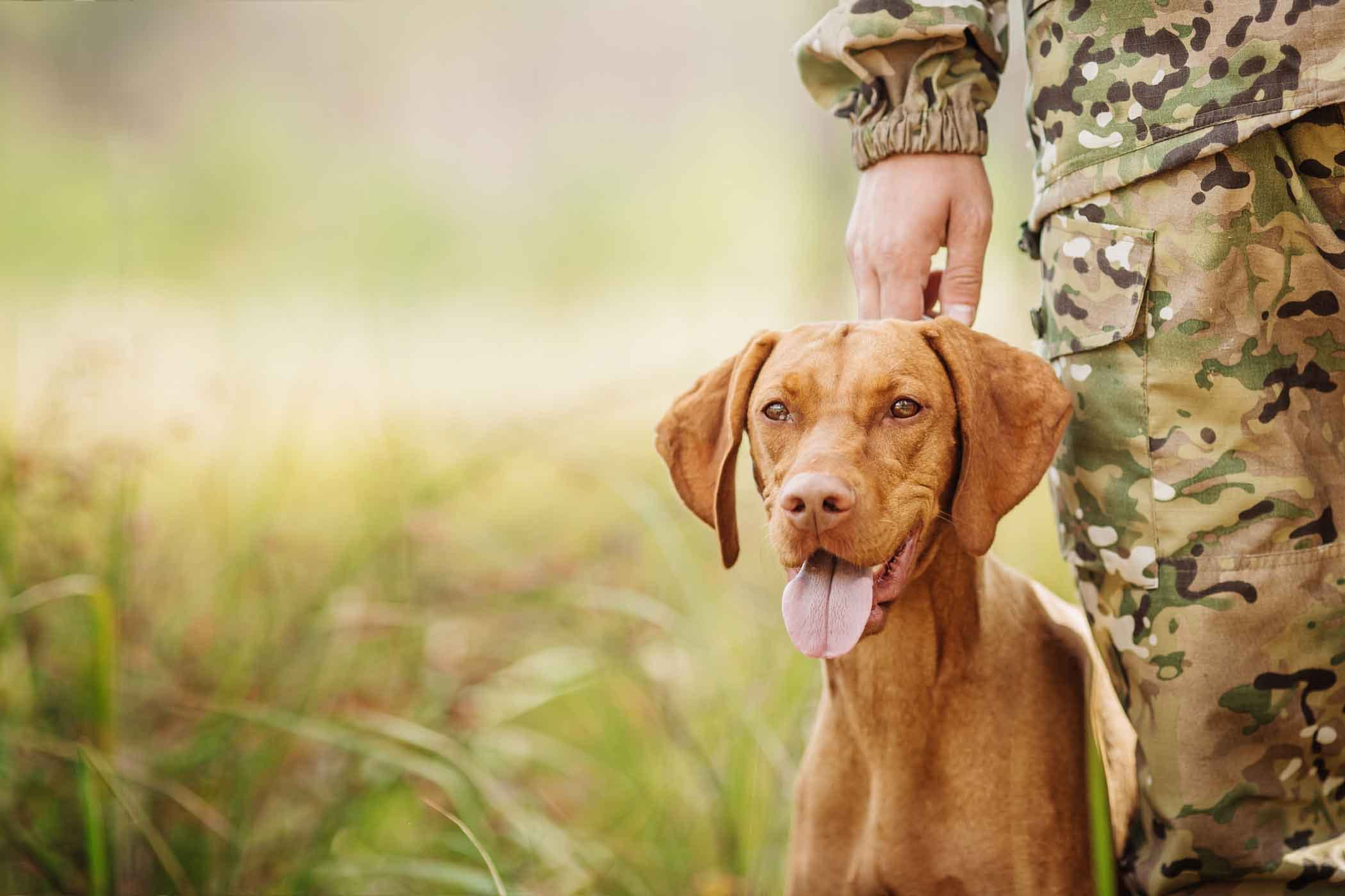 How to Train Your Hunting Dog When You Live in the City How to Train Your Hunting Dog When You Live in the City
