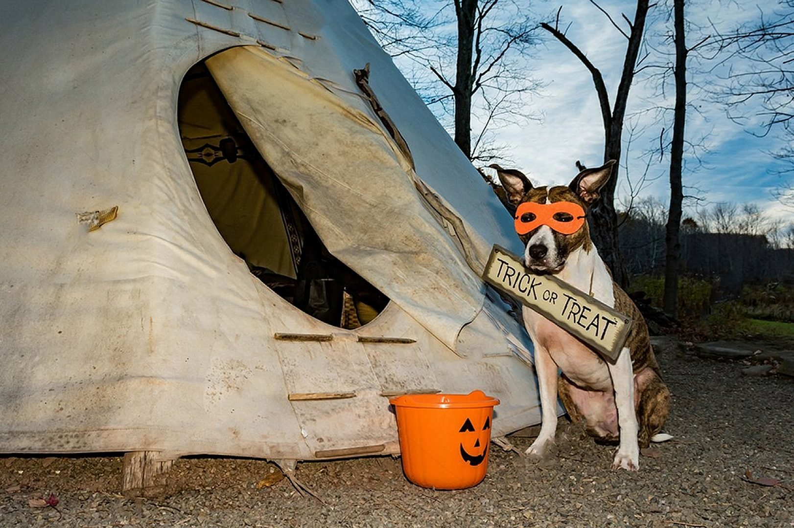 Dog in the Haloween Mask Trick or Treat