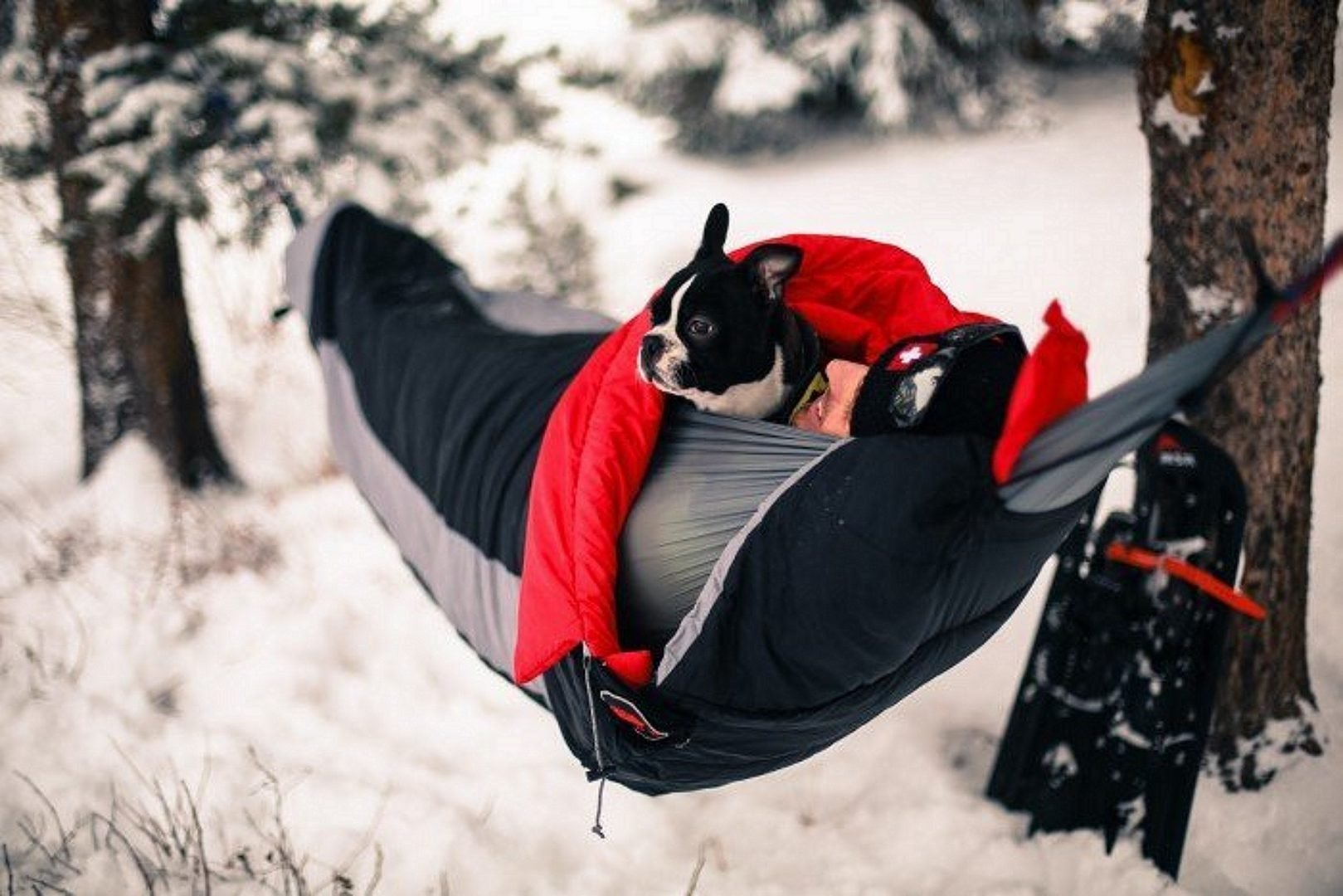 Man with a dog sleeping in hammock sleeping bag in winter