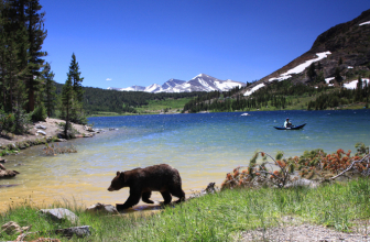 How To Protect Yourself From Bears While Hiking