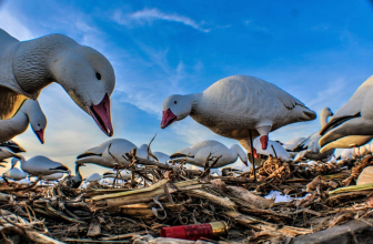 How to Be a Casual Snow Goose Hunter